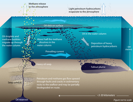 The Effects of Oil Spills | Sciencing
